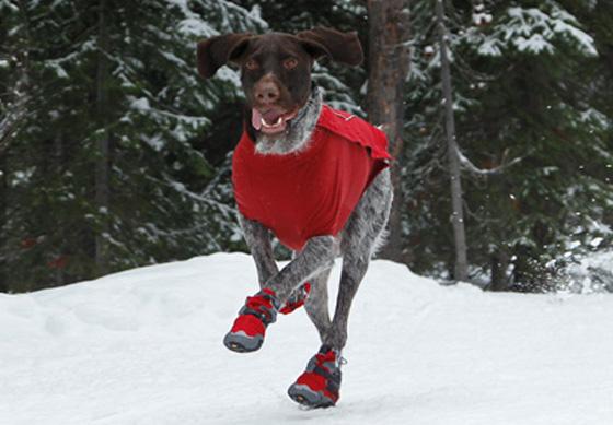 fb56d29415b7 5 принципов правильного выбора зимней обуви для собак